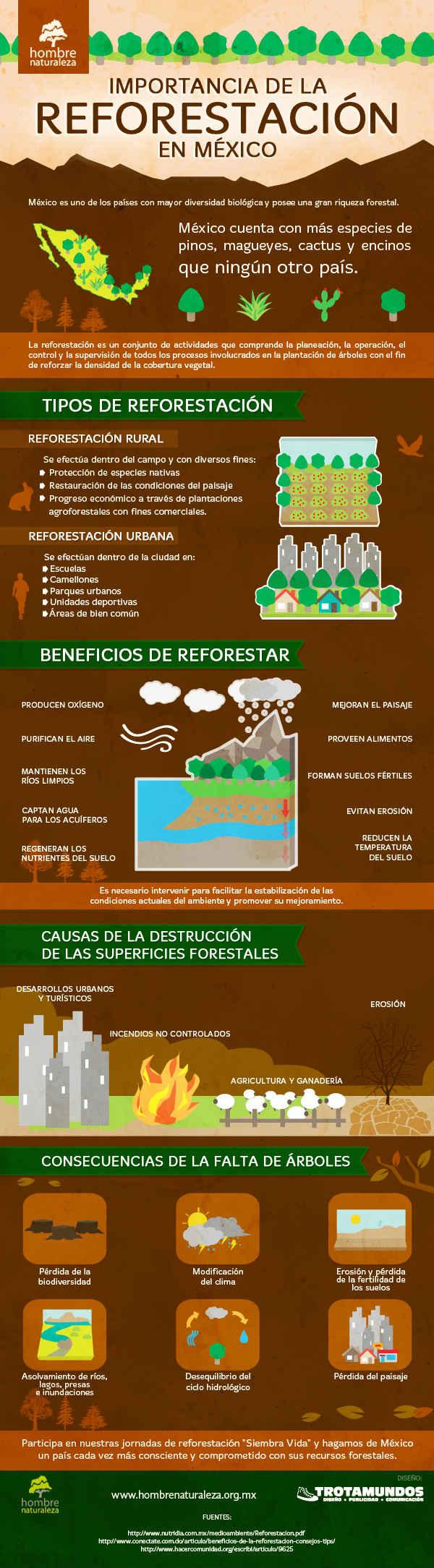 Infografía Reforestación