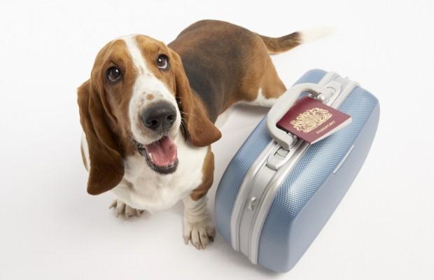 Mascotas-en-oficinas-sustentables