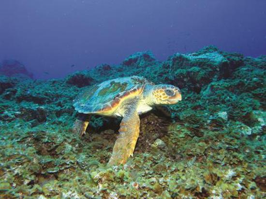 Las mejores actividades para festejar el Día Mundial del Turismo en Riviera Nayarit-3