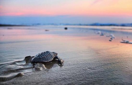 Las mejores actividades para festejar el Día Mundial del Turismo en Riviera Nayarit-8