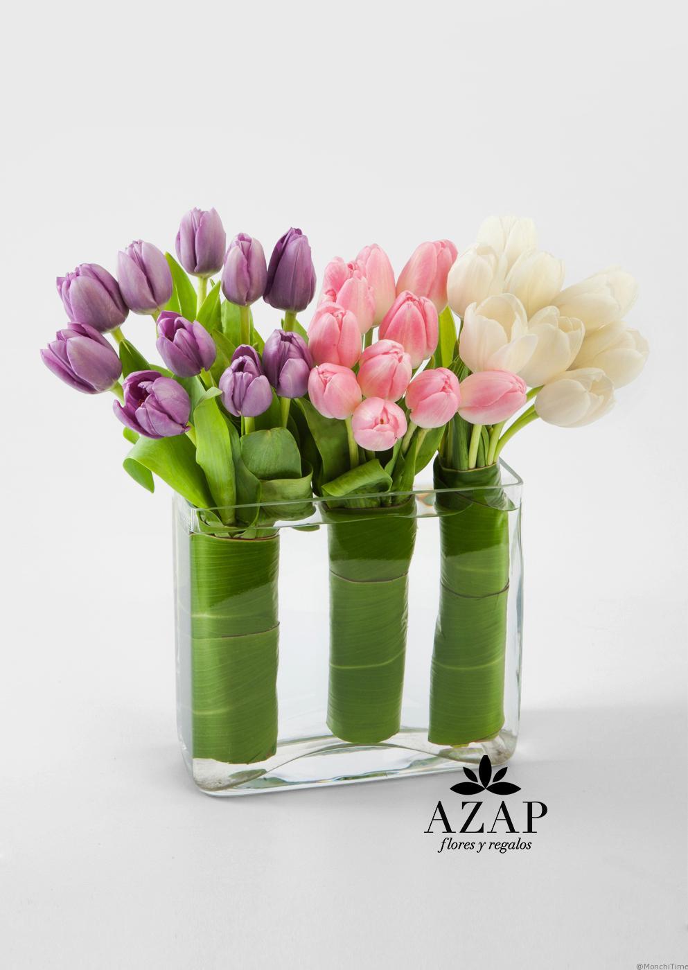 tulipanes-purpura-rosa-blanco-flores-a-domicilio-azap